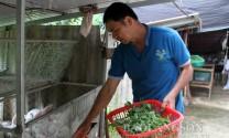Bắc Sơn (Lạng Sơn): Triển vọng kinh tế từ nuôi thỏ
