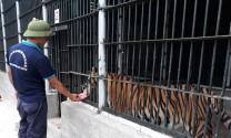 Trung tâm Cứu hộ Động vật hoang dã: Chuyên môn hóa mô hình quản lý