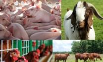 Khai thác cơ sở dữ liệu quốc gia về chăn nuôi