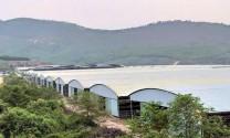 Ngăn chặn lấn chiếm đất đai tại dự án chăn nuôi bò