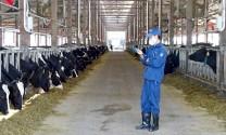 Trang trại chăn nuôi quy mô lớn phải đáp ứng tiêu chuẩn kỹ thuật quốc gia về môi trường