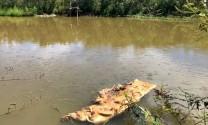 Nguy cơ lây bệnh và ô nhiễm từ lợn chết vứt bừa bãi