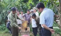 Lãi hơn 100 triệu đồng/năm từ nuôi ong ruồi lấy mật