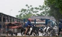 Giá heo hơi hôm nay 31/7: Chợ lợn Hà Nam tăng giá, miền Nam dân bán chạy cả heo nhỏ