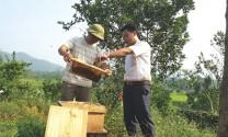 Hà Giang: Nuôi ong du mục lãi trên 350 triệu đồng/năm