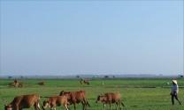 Thừa Thiên - Huế: Tái cơ cấu ngành chăn nuôi: Hướng đến chăn nuôi đại gia súc