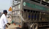 Công bố dịch bệnh dịch tả heo châu Phi trên địa bàn tỉnh Sóc Trăng