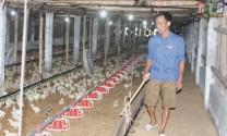 Hiệu quả chăn nuôi gà gia công
