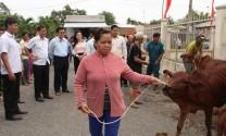 Nguyên Chủ tịch nước - Trương Tấn Sang trao 200 con bò giống cho hộ nghèo