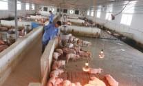 Ðiều kiện đầu tư kinh doanh trong chăn nuôi