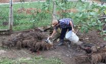 Hiệu quả từ mô hình nuôi heo rừng