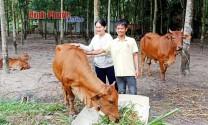 Thu nhập bền vững từ nuôi bò