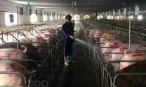 Bình Định: Thúc đẩy chăn nuôi an toàn sinh học