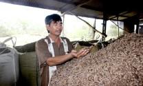 Biến phế phẩm nông nghiệp thành thức ăn chăn nuôi