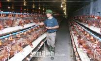 Làm giàu từ chăn nuôi gà siêu trứng theo tiêu chuẩn VietGAHP