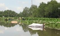 Tái diễn tình trạng vứt xác lợn chết xuống sông