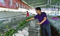 Phát triển mô hình nuôi thỏ theo tiêu chuẩn Nhật Bản