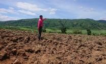 Nhiều bất cập tại dự án chăn nuôi gia súc Đắk Lắk