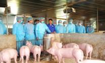 Trên 4,5 triệu con lợn bị tiêu hủy do bệnh dịch tả lợn châu Phi