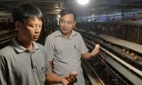 Anh nông dân kiếm tiền tỷ từ nuôi gà đẻ thụ tinh nhân tạo