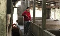 """Ghi nhận tại """"điểm nóng"""" dịch tả lợn châu Phi ở Thừa Thiên - Huế"""