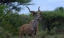 Các loài động vật chỉ có thể tìm thấy ở Châu Phi