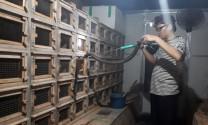 Hiệu quả từ mô hình tổ hợp tác chăn nuôi rắn