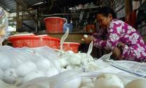 Hậu Giang: Giá trứng vịt tăng nhẹ