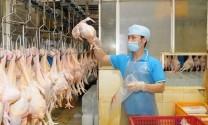 Xuất khẩu sản phẩm chăn nuôi đạt 449 triệu USD