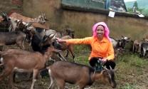 Yên Bái: Trao dê giống cho phụ nữ nghèo Nậm Búng