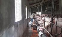 Thu tiền tỷ từ trang trại chăn nuôi tổng hợp