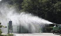 Heo rừng Triều Tiên nhiễm dịch tả 'tấn công' heo Hàn Quốc
