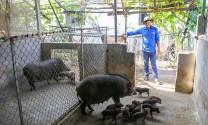 Nuôi lợn rừng, bí thư đoàn xã ở Hà Tĩnh thu 200 triệu đồng/năm