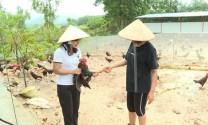Hà Nội: Đẩy mạnh xây dựng vùng chăn nuôi gia cầm an toàn dịch bệnh