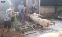 Dịch tả lợn châu Phi ở Lâm Đồng diễn biến phức tạp