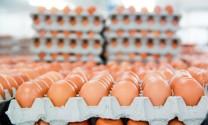 """Bất ngờ """"Vua thép"""" dẫn đầu thị phần trứng gà miền Bắc"""