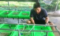 Bà Rịa - Vũng Tàu: Triển vọng từ mô hình nuôi lươn bằng bể bạt nilon