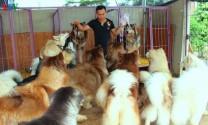 Nuôi chó cảnh ở vùng nông thôn Đắk Lắk - Cách làm lạ cho thu nhập cao