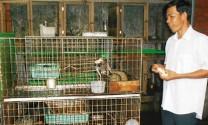 Trà Vinh: Thu nhập cao từ nuôi chồn hương
