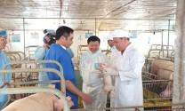 Bộ trưởng NNPTNT: Không được xuất tiểu ngạch lợn sang Trung Quốc