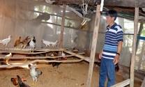 An Giang: Phát triển kinh tế từ mô hình chăn nuôi khép kín
