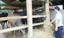 Tuyên Quang: Chủ động phòng, chống đói, rét cho đàn vật nuôi trong mùa đông