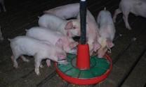 Tăng cường biện pháp kỹ thuật trong chăn nuôi (Tiếp theo)