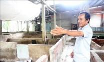 Yên Bái khuyến cáo người dân chưa vội tái đàn ồ ạt dù giá lợn tăng cao