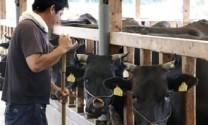 Mỹ: Đồng ý tăng hạn ngạch nhập khẩu thịt bò Nhật Bản