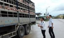Thủ tục kiểm dịch động vật nhập khẩu