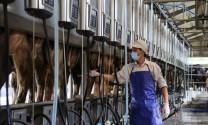 Yêu cầu với người vắt sữa, thu gom sữa