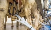 """Trung Quốc: Mảnh đất """"màu mỡ"""" cho thị trường sữa Việt Nam"""
