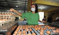 Malaysia: Sarawak có kế hoạch tăng xuất khẩu chăn nuôi vào năm 2030
