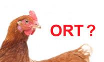 Biện pháp điều trị bệnh ORT trên gà